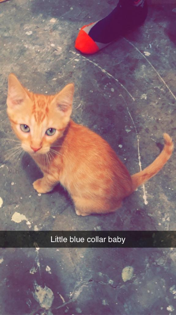 Bud (blue collar) ***Pending Adoption***