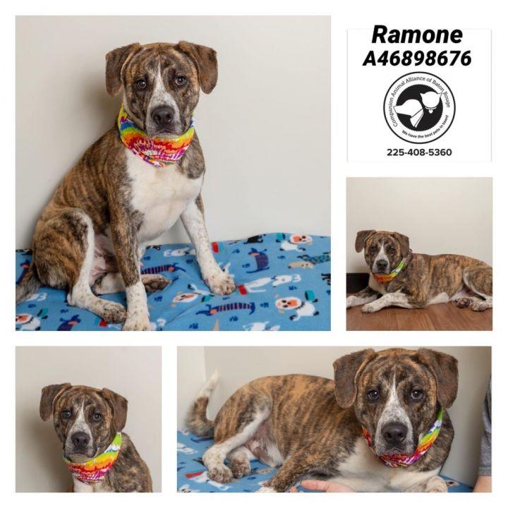 Ramone 2