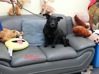 Jethro detail page