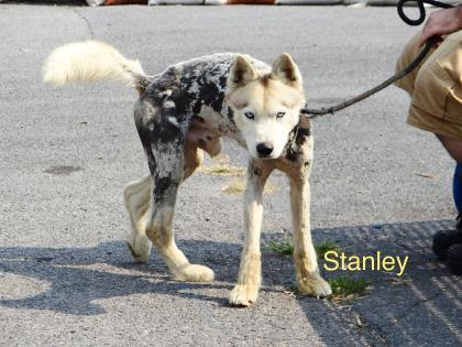 Stanley detail page