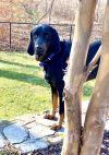 Cooper - Fostered in RI