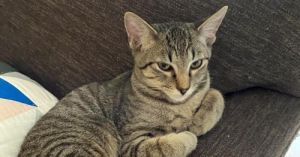 Meet Chili Once he gets to know you Chili is an outgoing affectionate and social guy who loves to