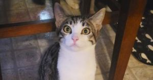 Meet Charlie Charlie is a very shy boy but hes the perfect cats cat He can be very skittish aro