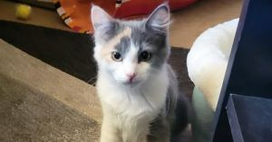 Meet Veruca Veruca is a shy but curious little girl and the perfect cats cat