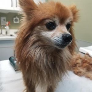 RED - ID#A376339