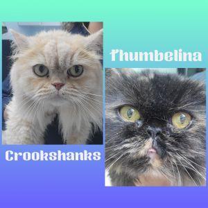 Crookshanks & Thumbelina