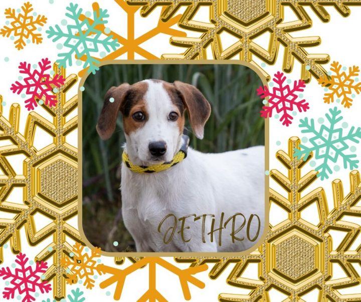 Jethro 1