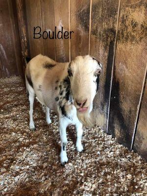 Sully & Boulder