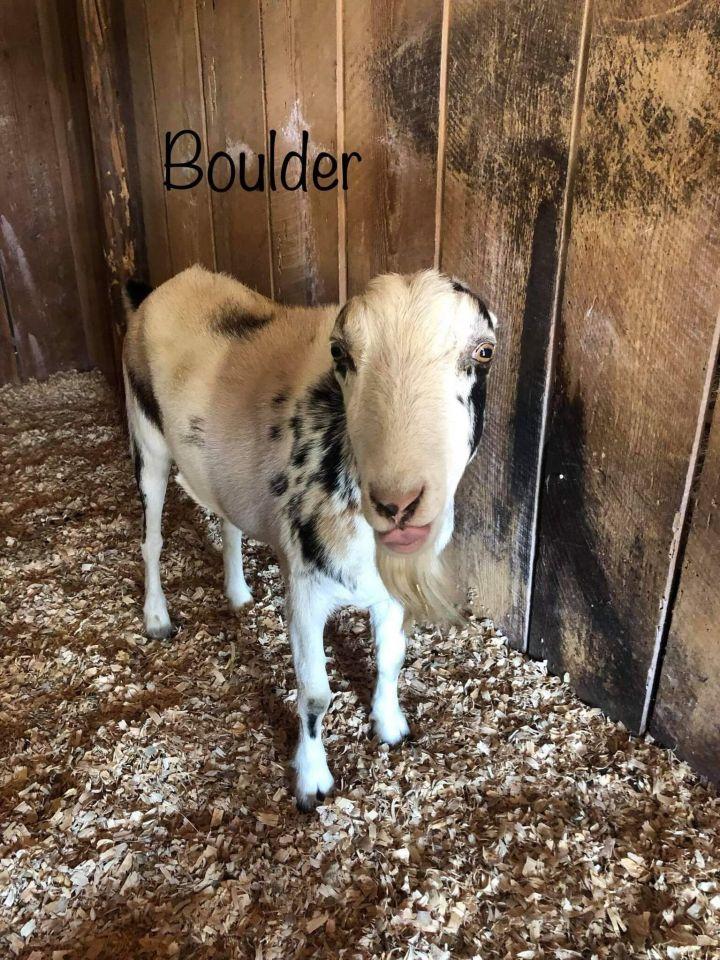 Sully & Boulder 1