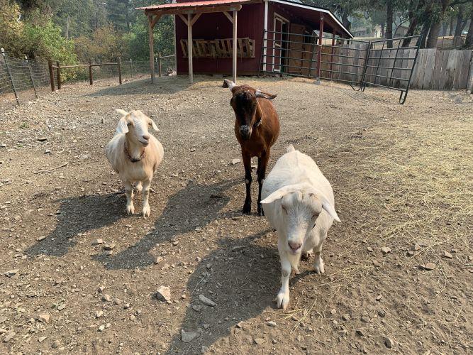 Lily, Rosie, & Moe