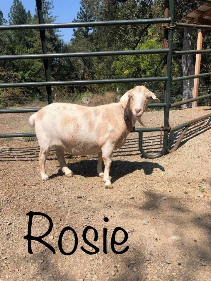 Lily, Rosie, & Moe 2