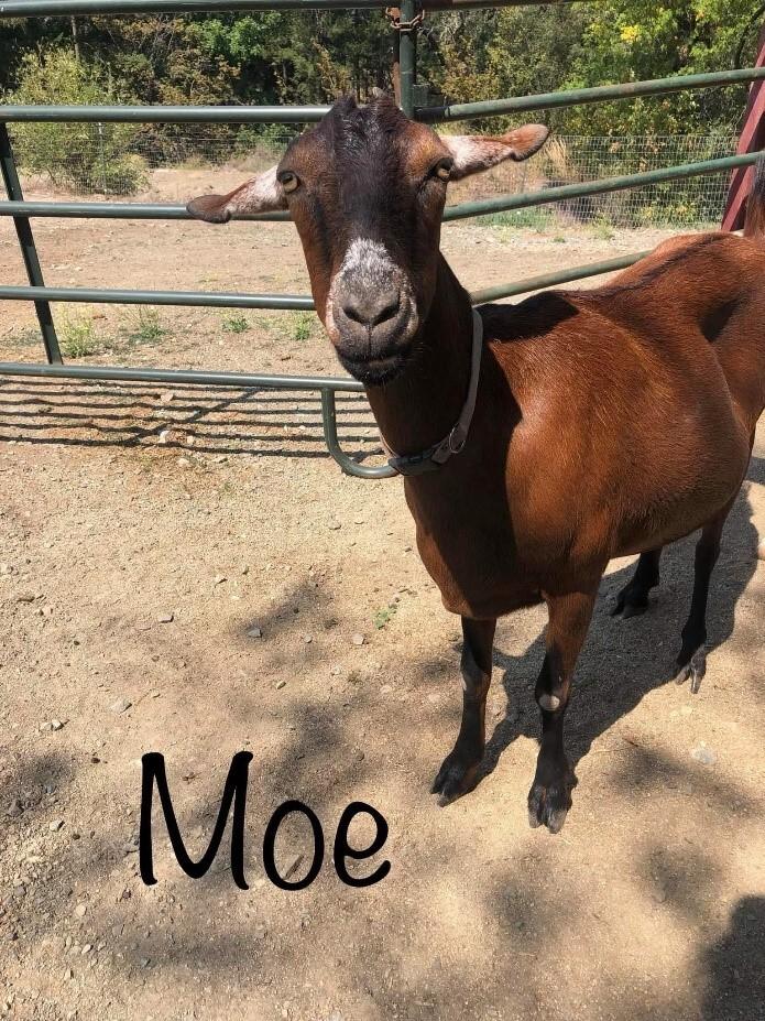 Lily, Rosie, & Moe 4