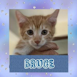 CATS_SanJuan2_Bruce-M