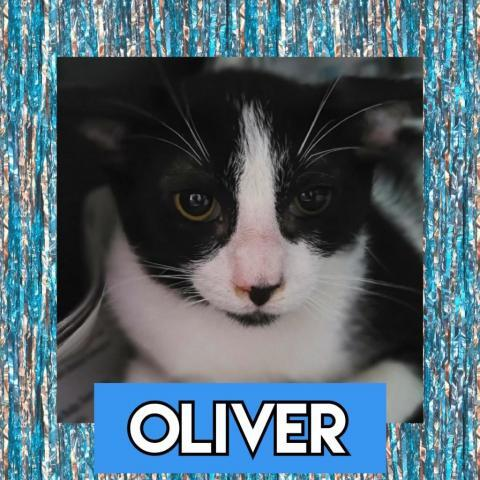CATS_SanJuan1_Oliver-M 1