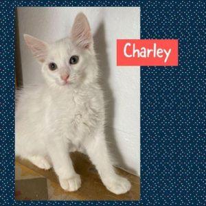 CATS_Santurce3_Charley-M