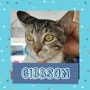 CATS_Ponce2_Gibbson-M