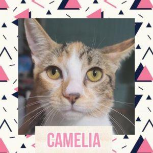 CATS_Santurce3_Camellia-F