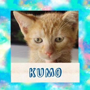 CATS_Dorado7_Kumo-M
