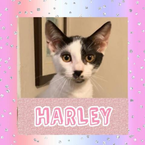 Cats Sanjuan 2 Harley M detail page