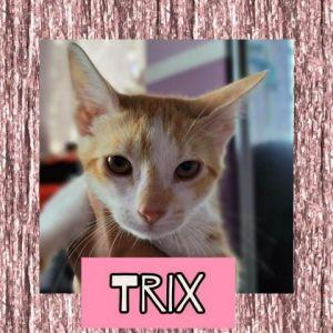 CATS_SanJuan1_Trix-F