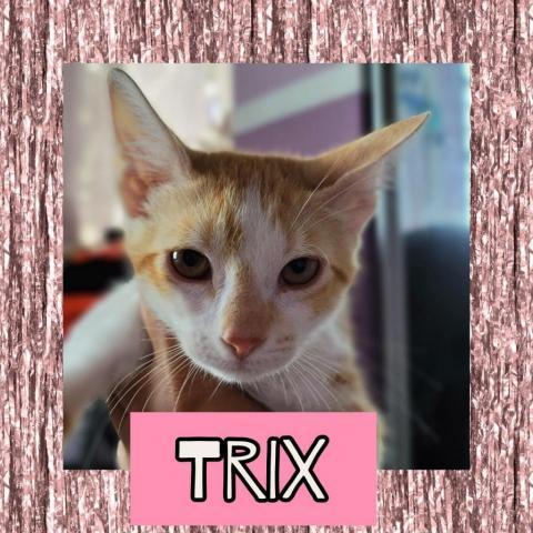 Cats Sanjuan 1 Trix F detail page