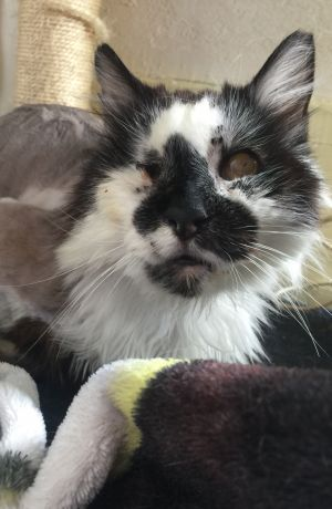 Wa-I-Nes story I was working at a veterinarians office when a woman brought in a cat that was taped