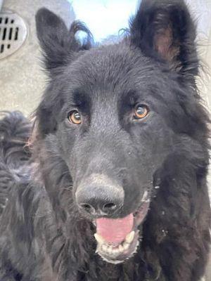 ZUKO Mixed Breed Dog