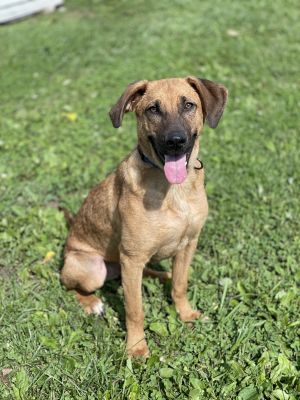 Cash is a 2 year old 56 pound neutered male Shepherd mix Hes outgoing and curious with a high ener