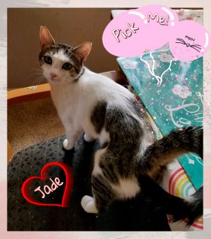 This cutie is named Jade She is super playful her favorite is climbing the cat tree Shes shy at