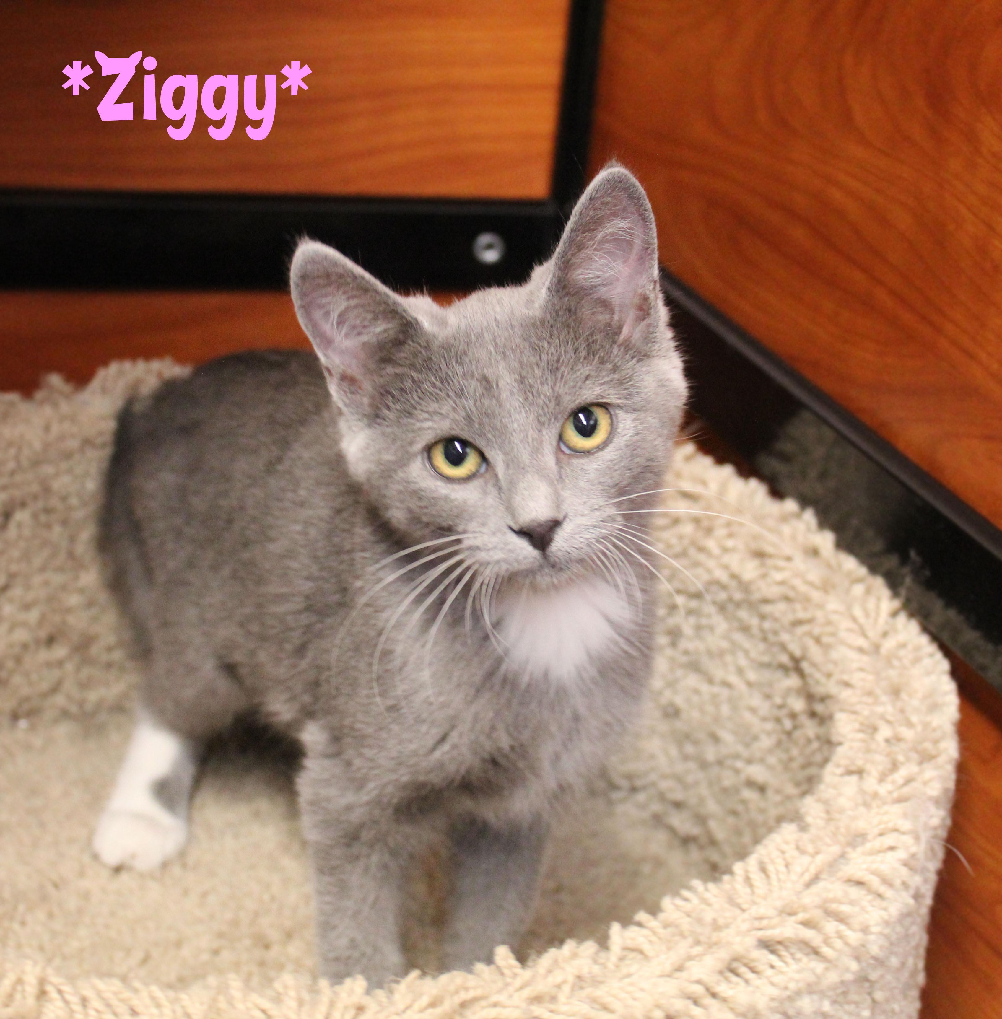 Ziggy detail page