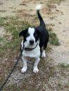 Augustus - Adoption Pending!!