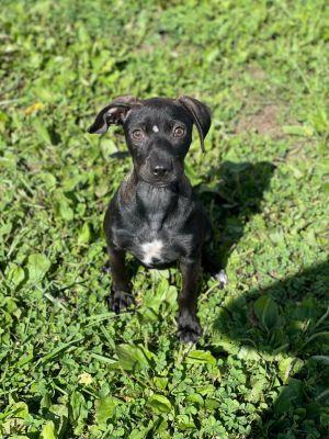 Gianani Mixed Breed Dog