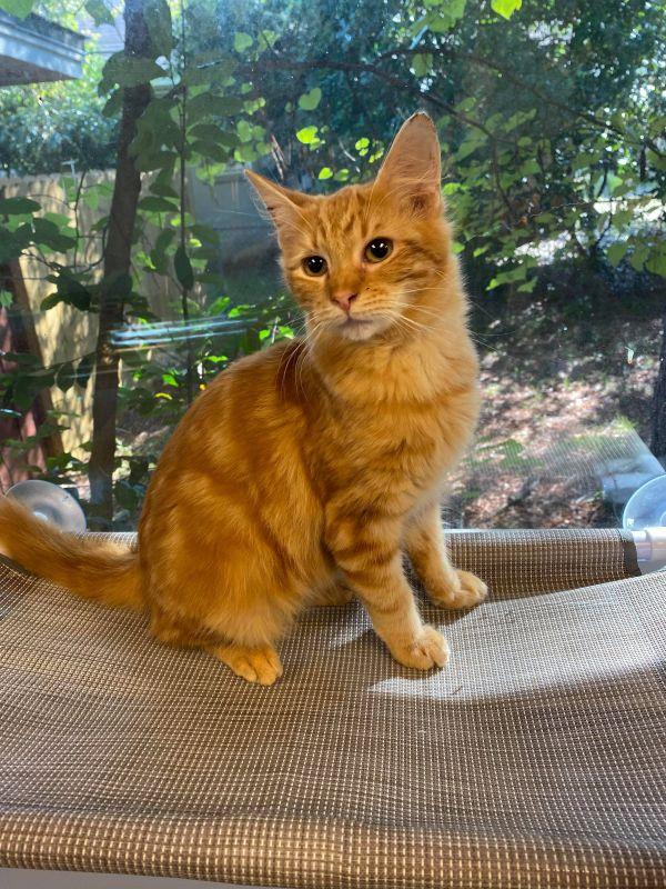 Photo of Mufasa