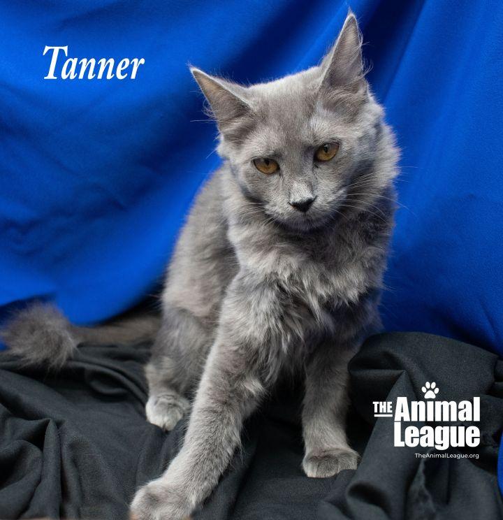 Tanner 3