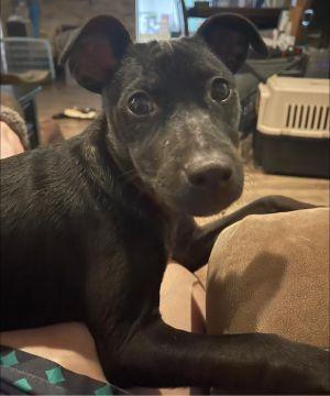 Meredith (TX) Mixed Breed Dog