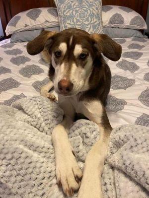 Kiwi (TX) Mixed Breed Dog