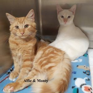 Monty and Alfie (  bonded pair)