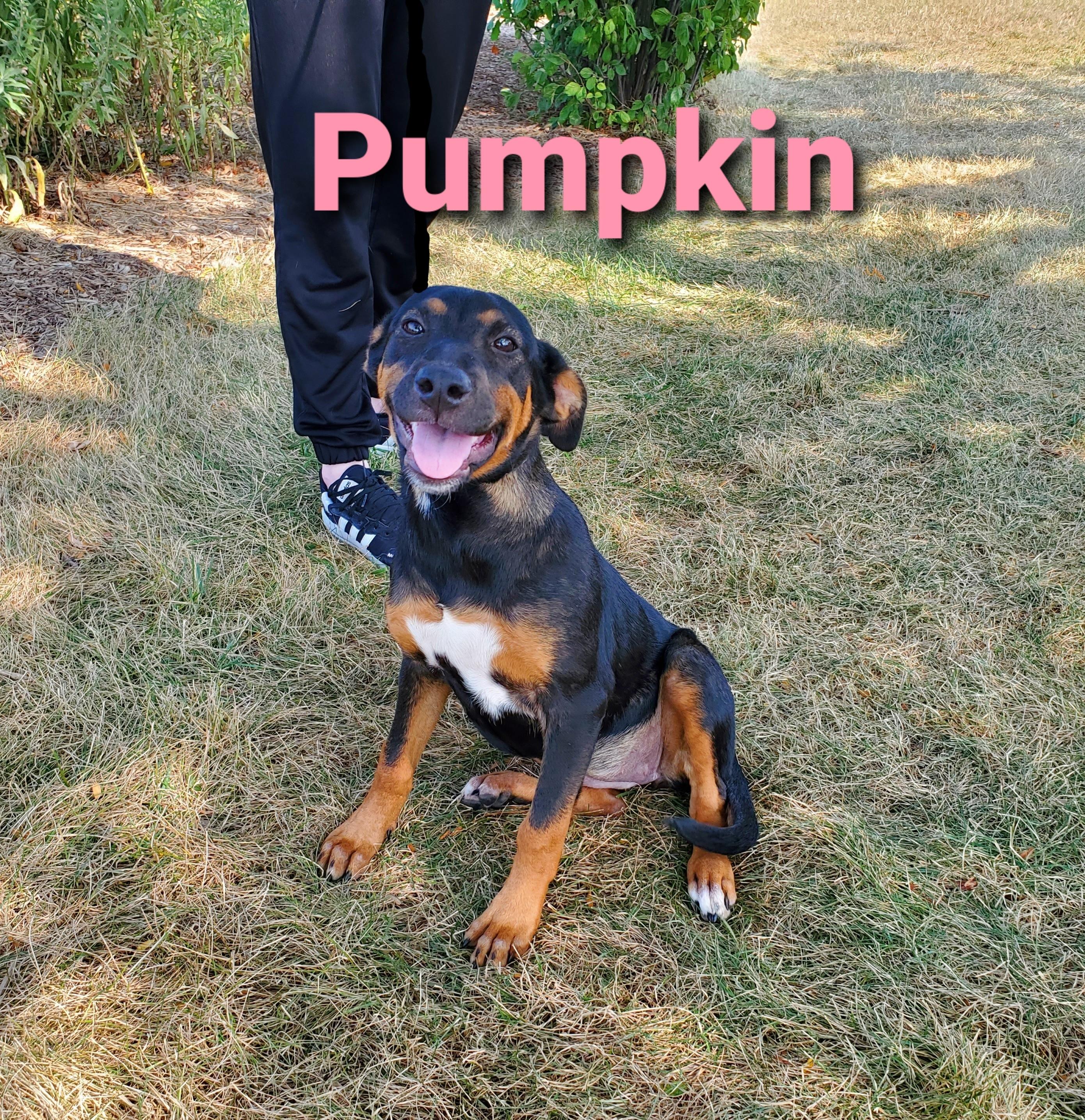 Pumpkin detail page