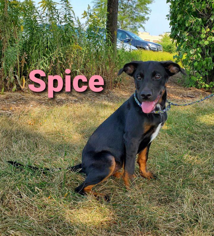 Spice 1