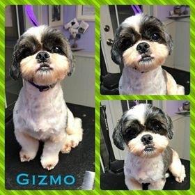 Gizmo & Honey 1