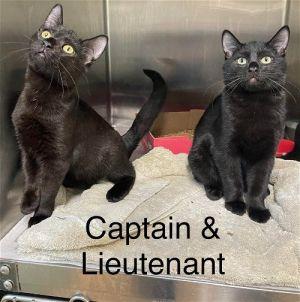 Lieutenant & Captain