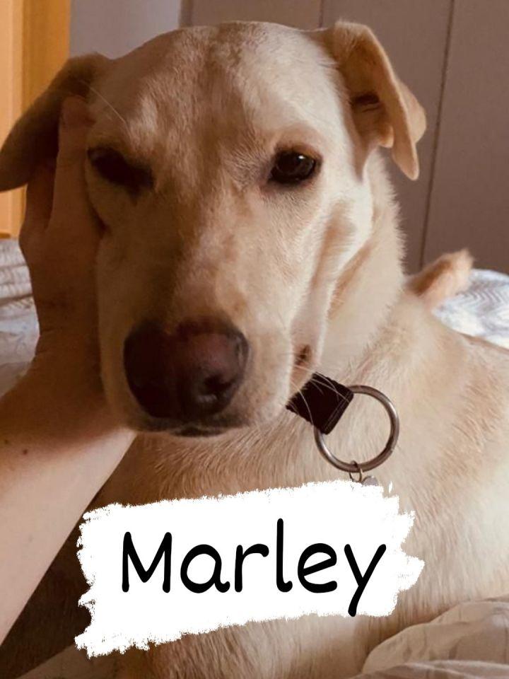 Marley B 3