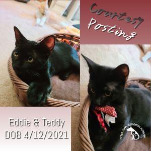 Eddie and Teddy