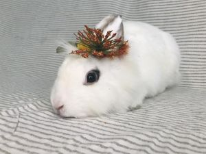 JOLLI Bunny Rabbit Rabbit
