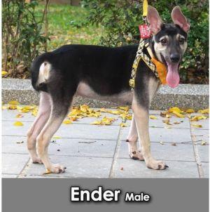 Ender Mountain Dog Dog