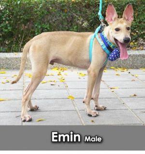 Emin Mountain Dog Dog