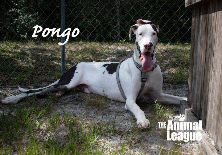 Pongo 2