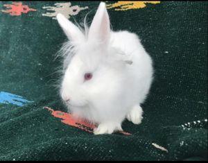 MARCH Bunny Rabbit Rabbit