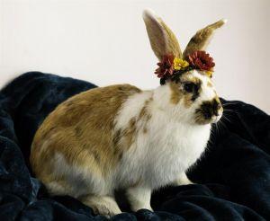 CADBERRY Bunny Rabbit Rabbit