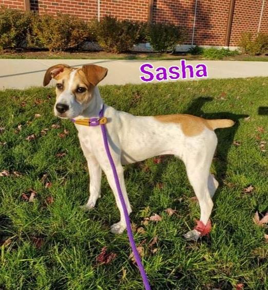 Sasha  1